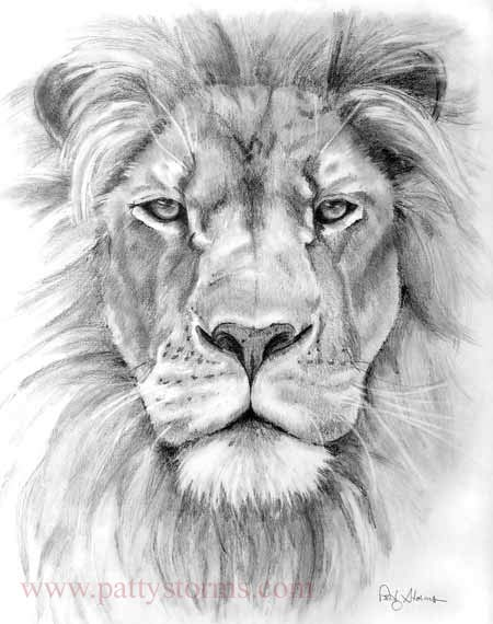 lion - front view pencil drawings