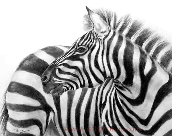 Gallery For gt Zebra Pencil Drawing